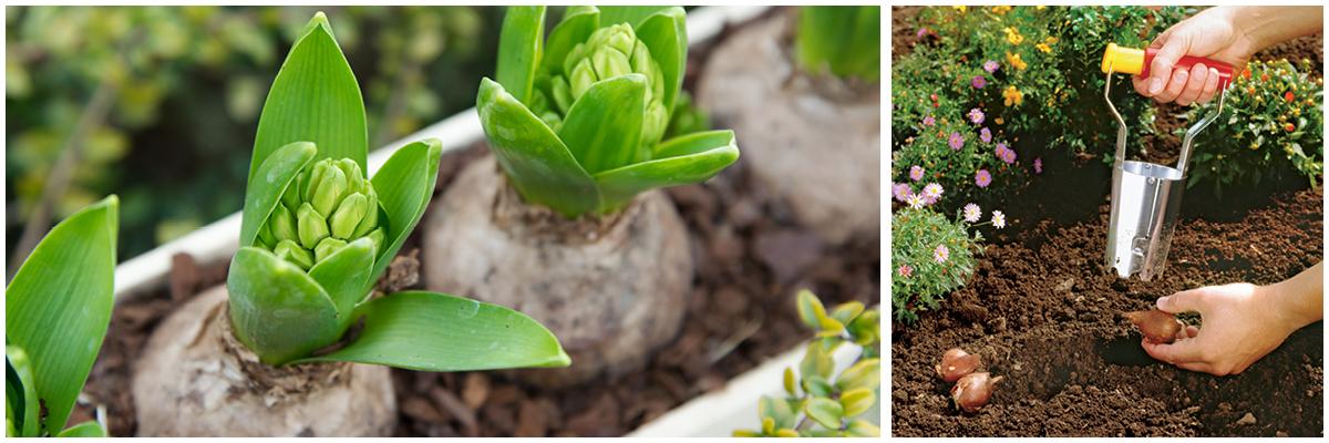WOLF-Garten Bulb Planter