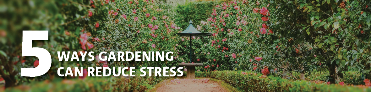 5 Ways Gardening Can Reduce Stress