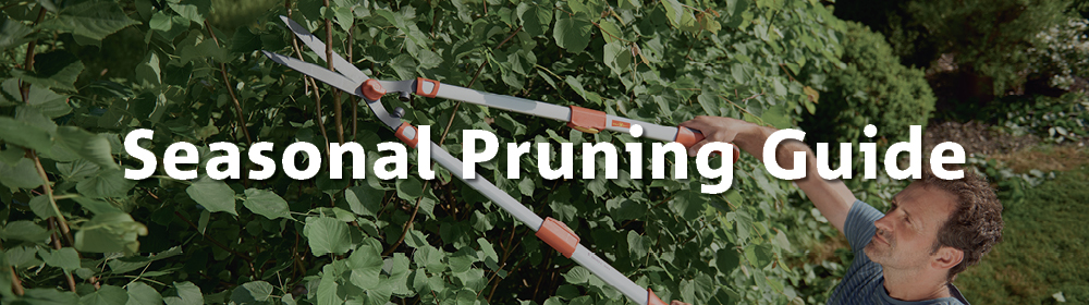 Seasonal Pruning Guide