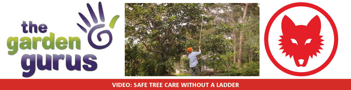 Safe tree care without a ladder
